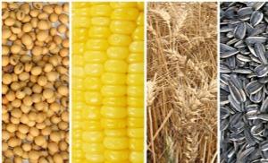 Mercado-de-granos